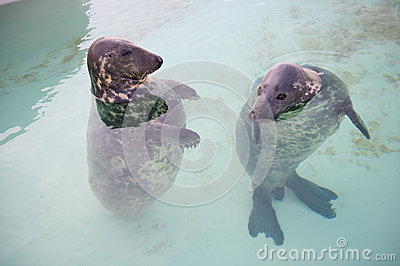 Two seal