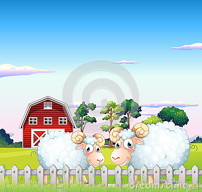 Free Two Sheeps Inside The Fence With A Barn At The Back Stock Photos - 33073453