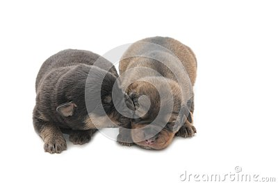 Two small blind puppies