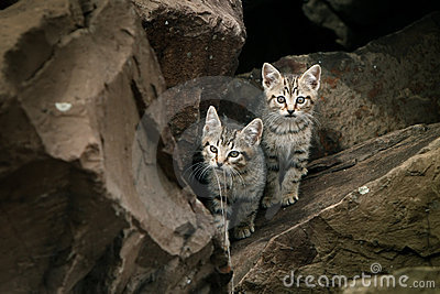 Two small cute, wild stray kittens.