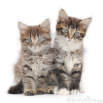 Free Two Small Kittens Royalty Free Stock Photography - 33548837