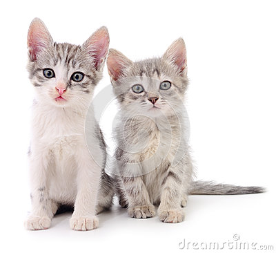 Free Two Small Kittens. Royalty Free Stock Photography - 86457767