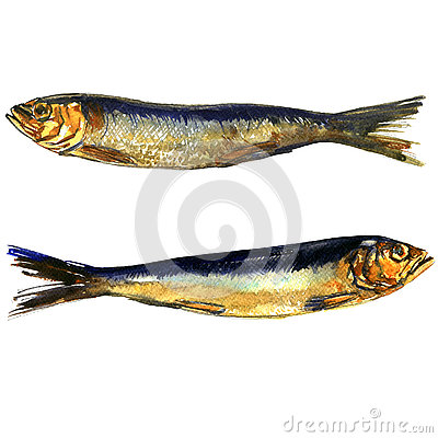 Free Two Smoked Sprats Fish Closeup Isolated, Watercolor Illustration On White Stock Photos - 78619753