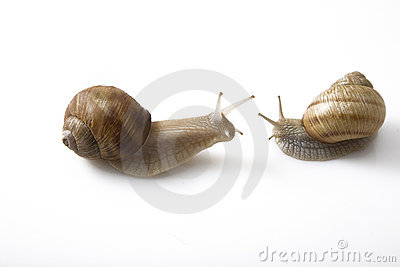 Two snails face to face, communication concept