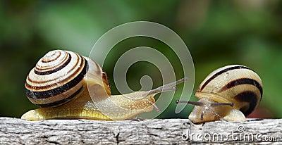 Two snails in a garden