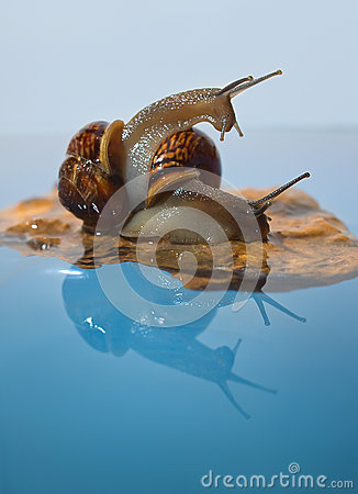 Free Two Snails On A Rock Royalty Free Stock Photo - 33395665