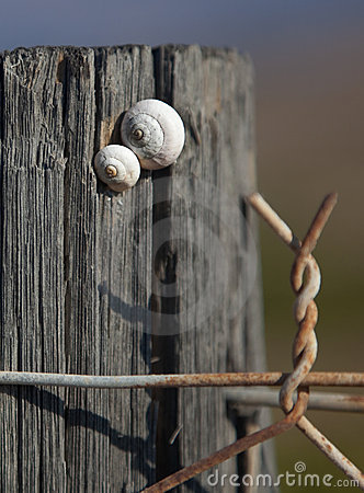 Free Two Snails On Post Of Barbed Wire Fence. Royalty Free Stock Photos - 11964038