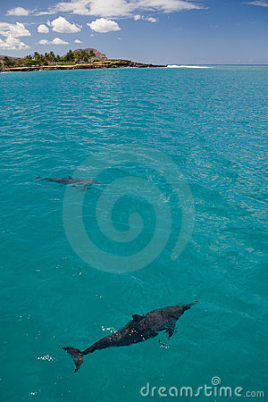 Two Spinner Dolphins