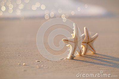 Two starfish on sea ocean beach in Florida, soft gentle sunrise