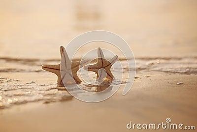 Two starfish on sea ocean beach in Florida, soft gentle sunrise