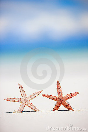 Two starfish on tropical beach