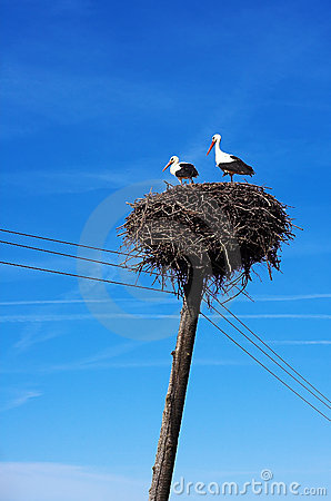 Free Two Storks Stock Photography - 722582