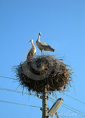 Free Two Storks In The Nest Stock Photo - 1022140