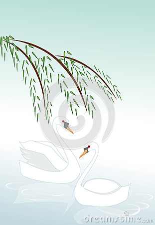 Two swans floating on water