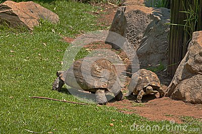 Two tortoises blow over slowly