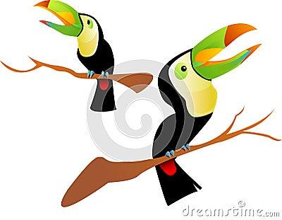 Two toucan bird