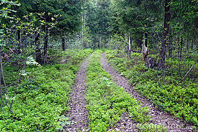 Two track through the forest