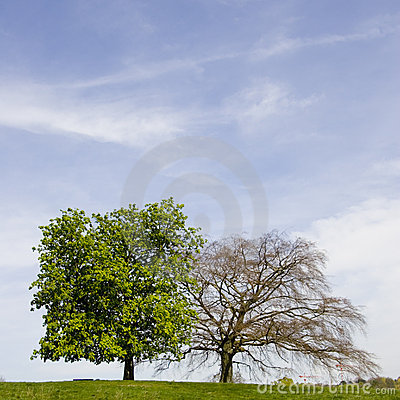 Free Two Trees Royalty Free Stock Image - 6258896