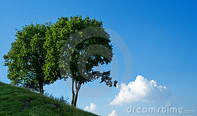 Two trees and blue sky