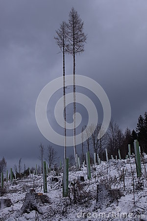 Free Two Trees In Storm. Stock Photography - 29790832