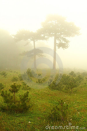Two trees under fog