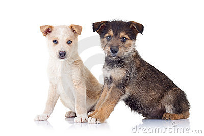 Two very cute stray puppies