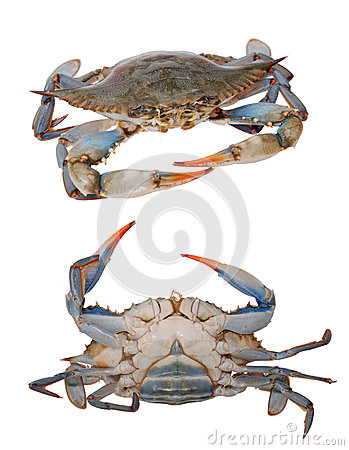 Two views of crabs