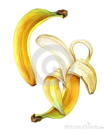 Free Two Watercolor Ripe Bananas Isolated On White Background. Stock Photos - 108735063