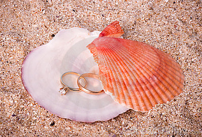 two wedding golden rings on shell