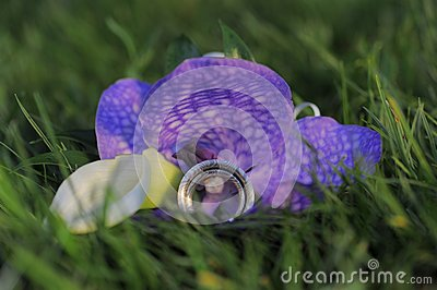 Two wedding rings on violet flower