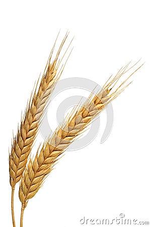 Two wheats