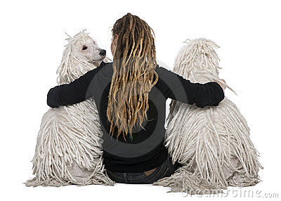 Two White Corded standard Poodles and a girl