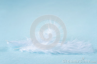 Two white feathers on light blue linen background