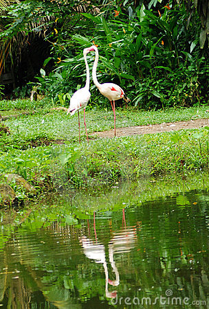Free Two White Flamingos In Love Stock Photos - 5110973