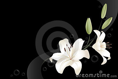 Two white lilies