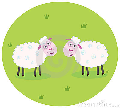 Two white sheep