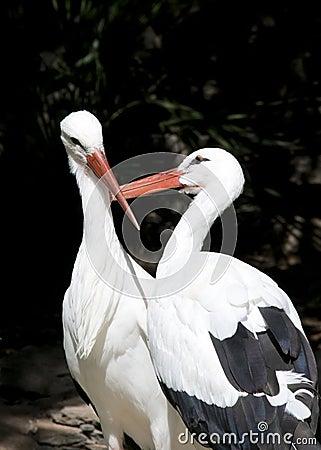 Free Two White Storks Stock Photo - 16776360