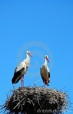 Free Two White Storks Royalty Free Stock Images - 8056099