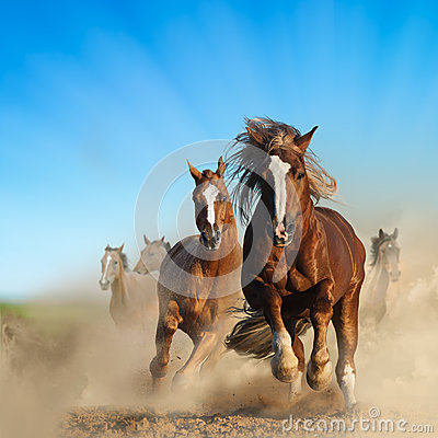 Free Two Wild Chestnut Horses Running Together Royalty Free Stock Photo - 86084105