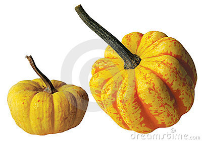 Two Yellow Gourds