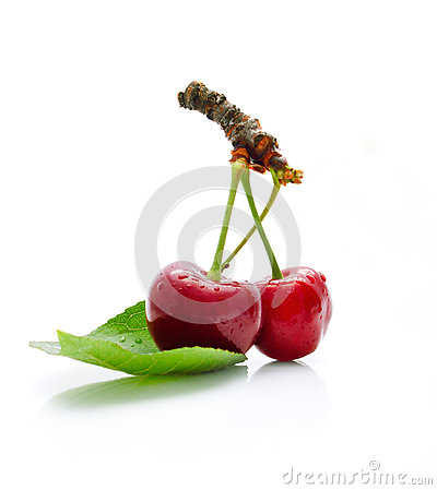 Two yummy cherries on the white background