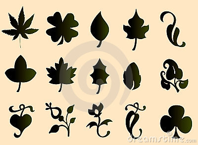 Type of leaves