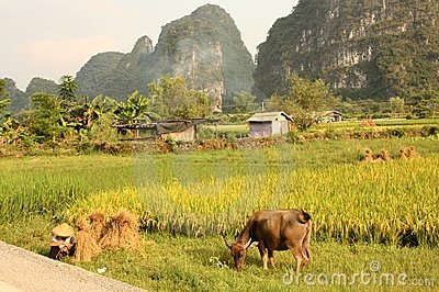 Typical Chinese scenery of Yangshuo Editorial Photography