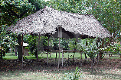 Typical habitation of the native amazon indian