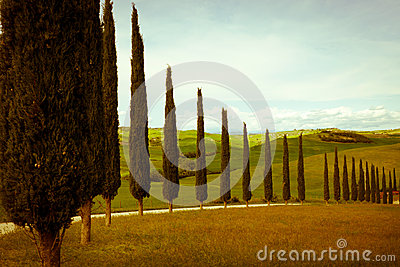 Typical tuscany countryside