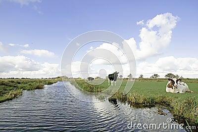 Typical wide dutch landscape