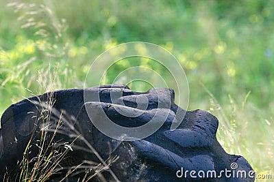 Tyre in a field