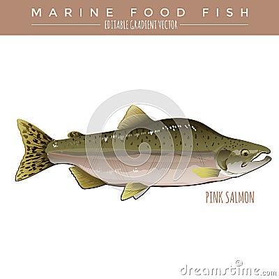 食用鱼大致扁圆形细尾巴叫什么名.有人叫华子鱼.脆骨多的