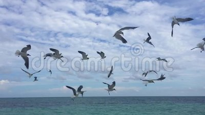 uccelli stock footage