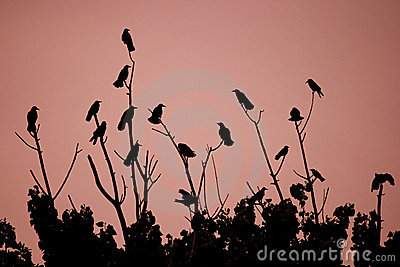 Uccelli sui cespugli